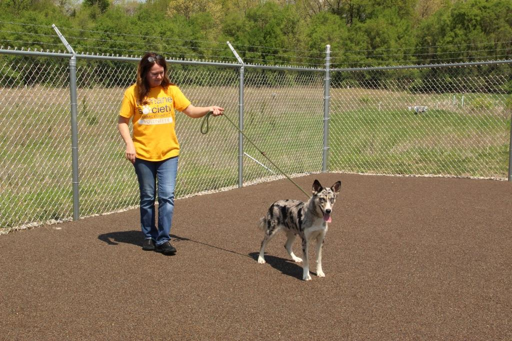 Exercising Dogs and Learning about their Behavior to Match them with Adopters