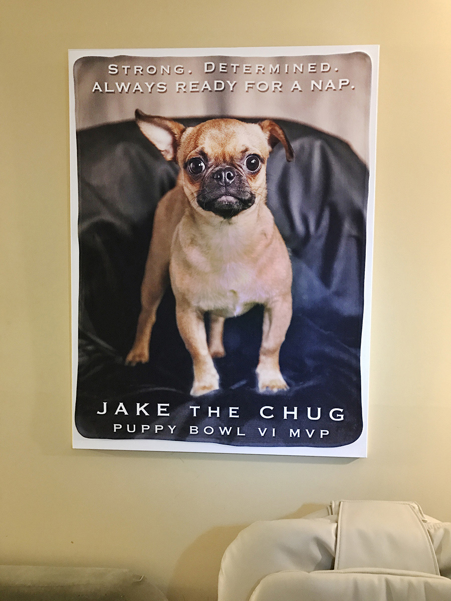 A Jake the Chug Blanket attached to a 30x40 inch canvas. Photo: Andrew Darlow